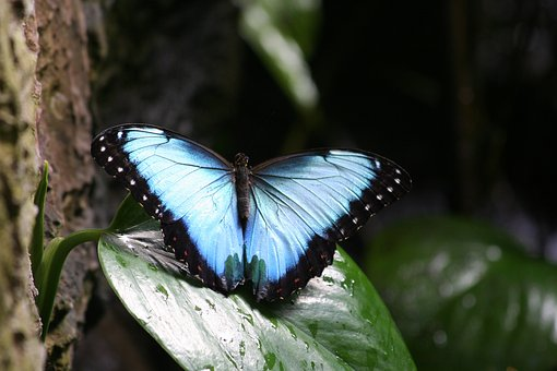 Insect, Butterfly, Nature, Outdoors, Wing
