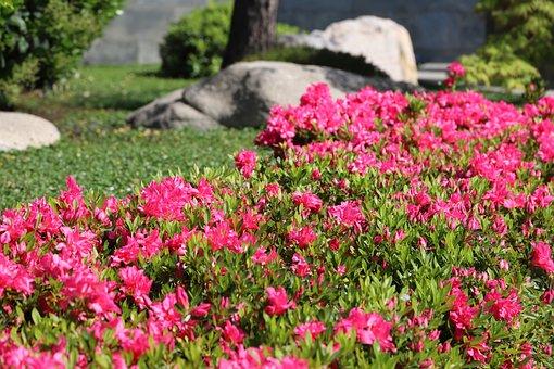Flower, Nature, Garden, Summer, Plant, Lawn, Flowering