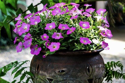 Petunia, Display, Container, Garden, Flower, Nature