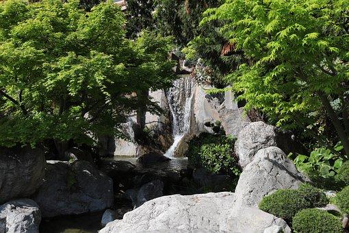 Nature, Tree, Outdoor, Wood, Park, Beautiful, Leaf