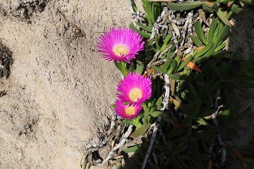 Nature, Plant, Flower, Outdoor, Summer, Leaf, Garden