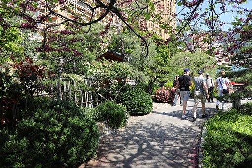 Tree, Garden, Flower, Nature, Park, Plant, Outdoor