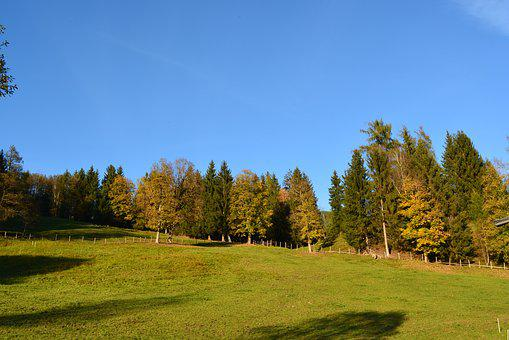 Tree, Nature, Grass, Landscape, Wood, Schönwetter