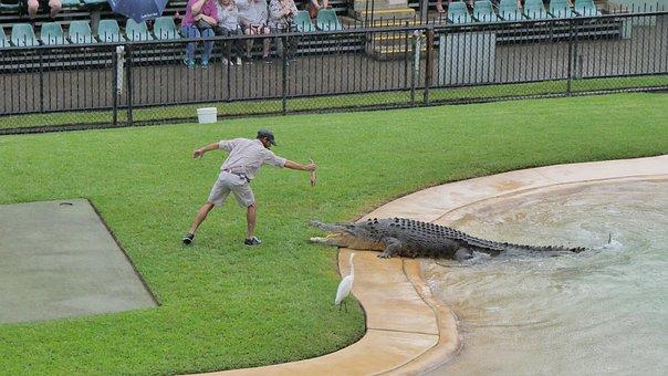 Grass, Water, Outdoors, Nature, Crocodile, Crock