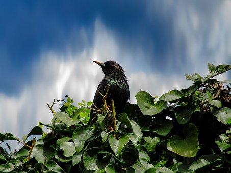 Blackbird, Bird, Nice, Flight, Birds, Nature, Outdoors