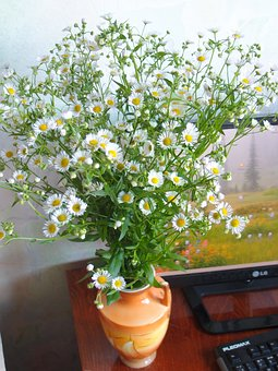 Flower, Plant, Nature, Sheet, Summer, Chamomile, Daisy