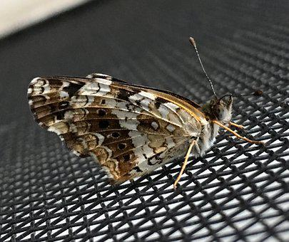 Small Butterfly, Antenna, Tiny, Butterfly, Small