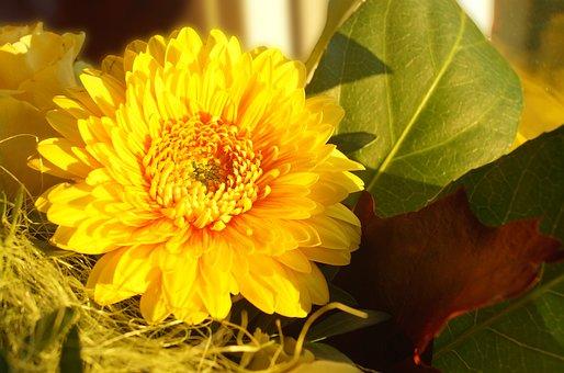 Flower, Nature, Background, Yellow, Stengel, Summer
