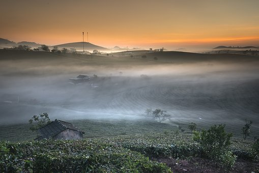 Farm, The Morning, Tea, Vietnam, Moc Chau, Nice