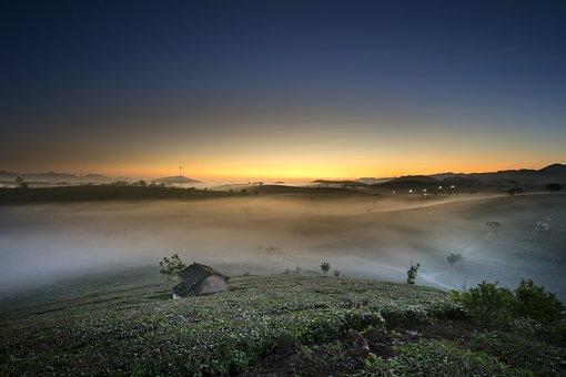 Farm, The Morning, Tea, Vietnam, Moc Chau, Sơnla, Nice