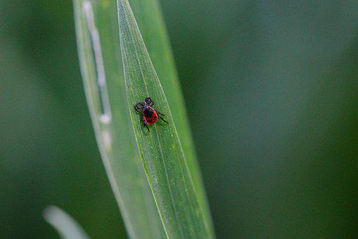 Insect, Nature, Leaf, Animal World, Tiny, Summer, Small