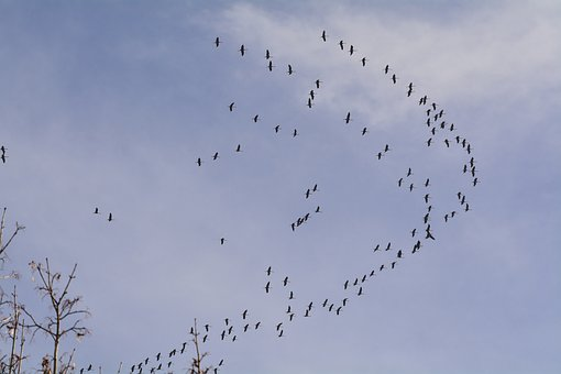 Cranes, Travel, Autumn, Sky, Flight, Formation, Bird