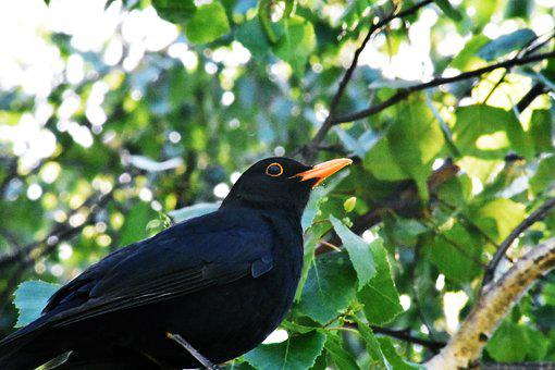 Bird, Nature, Wild World, Outdoors, Wood, Wing