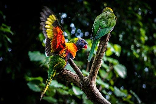 Bird, Nature, Parrot, Wildlife, Wing, Avian, Animal