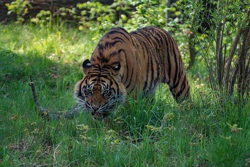 Animal World, Nature, Cat, Animal, Mammal, Carnivores