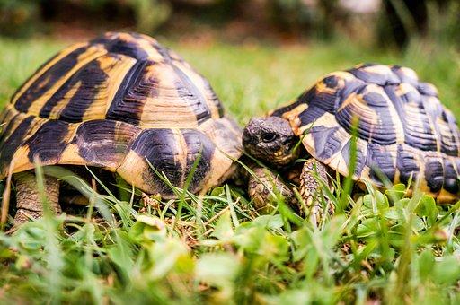 Nature, Slowly, Animal