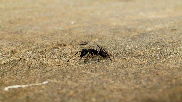 Ant, Nature, Sand, Animalia, Wild Life, Outdoors
