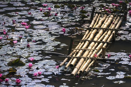 Lily, Bridge, Ao, Tre, Lotus Flowers, Background, Nice