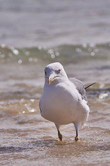 Seagull, Sea, Beach, Bird, Animal World, Nature, Animal