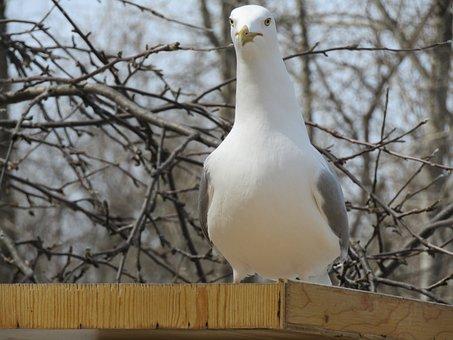 Nature, Bird, Animal, Outdoors, Wildlife, Beautiful