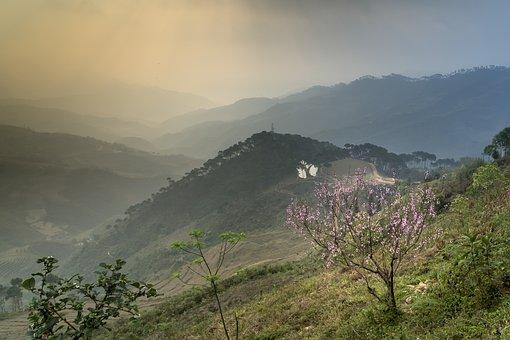 Spring, Cherry Flowers, Vietnam, Nice, Natural, Happy