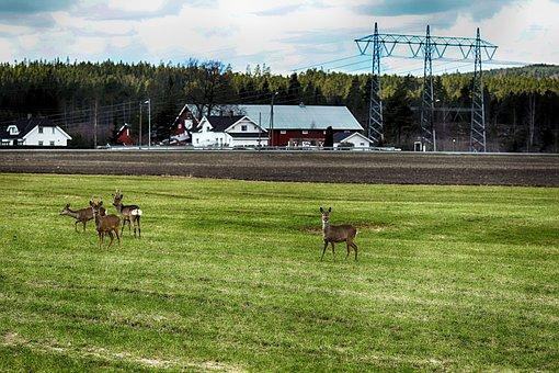 Deer, Grass, Landscape, Animal
