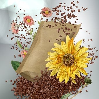 Coffee, Morning, Coffee Beans, Flower, Plant, Sunflower