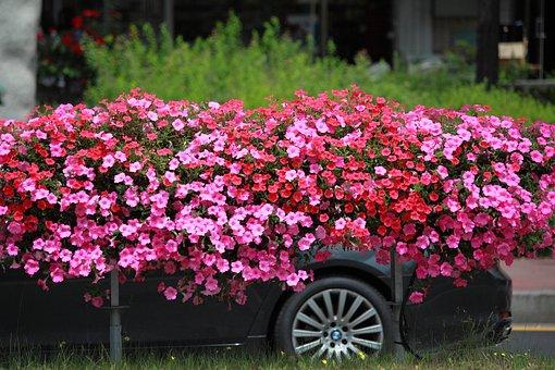 Flowers, Garden, Plants, Nature, Summer, Road