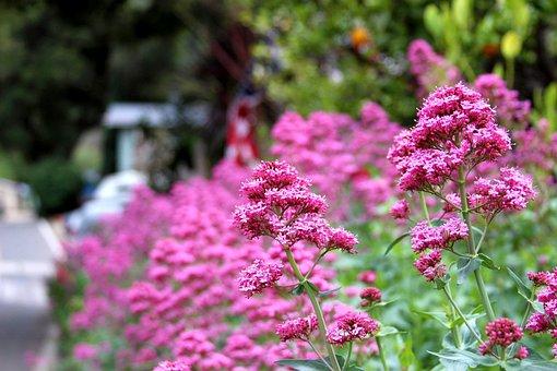 Flower, Nature, Flora, Blooming, Garden, Outdoors