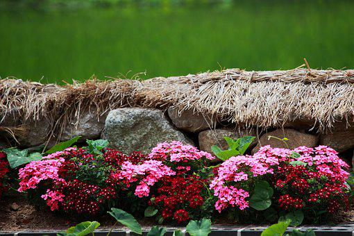 Nature, Flowers, Plants, Grass, Outdoors, The Same Joke