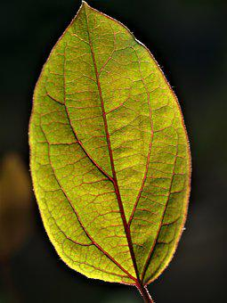 Leaf, Fall, Flora, Nature, Growth