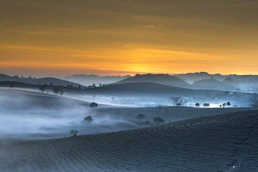 Tea Plantation, Landscape, Vietnam, Haze, Morning