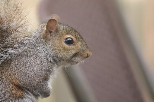 Cute, Mammal, Little, Animal, Fur, Squirrel, Rodent