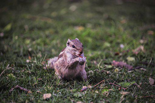 Nature, Grass, Outdoors, Wildlife, Animal, Little, Cute