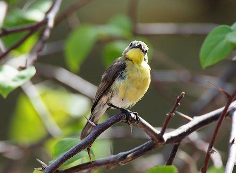 Bird, Nature, Wildlife, Outdoors, Animal, Little, Wild