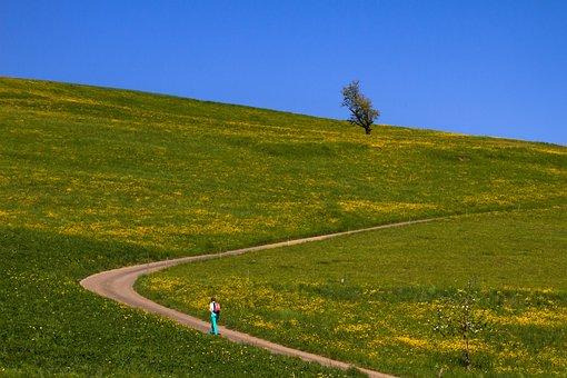 Trail, Landscape, Meadow, Landscape Way, Migratory Path