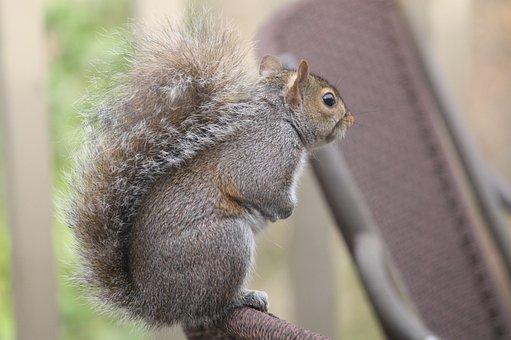 Mammal, Wildlife, Squirrel, Cute, Nature, Rodent, Sit