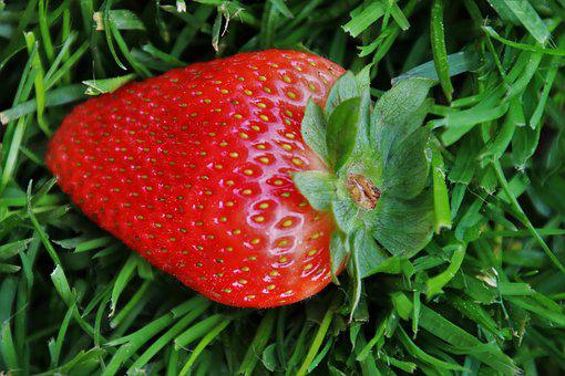 Grass, Strawberry, Spring, Tasty, Nature, One, Fit