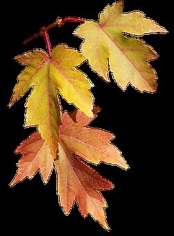 Leaves, Autumn, Fall, Nature, Season, Tree