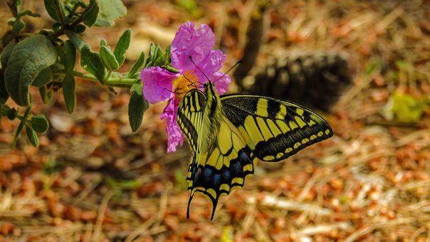 Butterfly, Nature, Plant, Leaf, Flower, Outdoors
