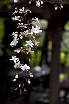 Dạ Minh Chau, Page, Flower, Background, Cute