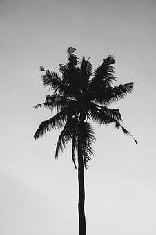 Tropical, Palm, Nature, Tree, Beach, Summer, Travel