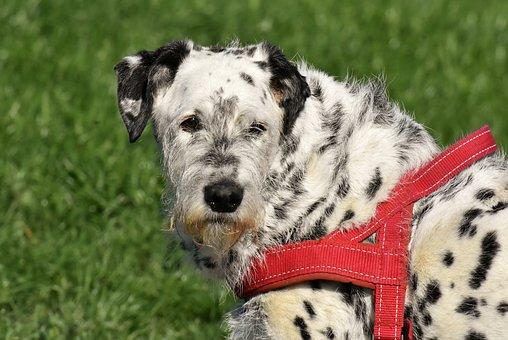 Dog, Fur, Animal, Pet, Portrait, Cute, Mixed Breed Dog