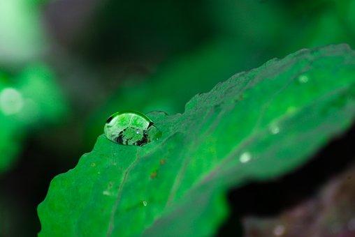 Leaves, Rain, Nature, Environmental, Plant, Moisture