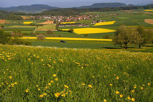 Fields, Reported, Oilseed Rape, Field Of Rapeseeds