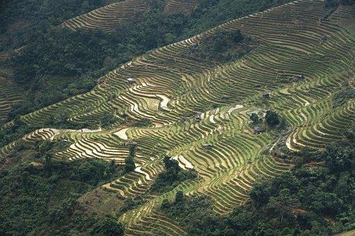 Terraces, Scenery, Sơnla, Moc Chau, Magical, Field