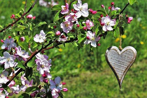 Sad, Heart, Spring, Flower, Nature, Plant, Garden, Tree