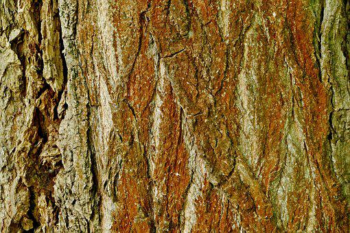 Tree, Bark, Structure