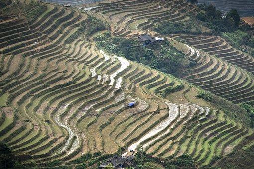 Terraces, Scenery, Son La, Moc Chau, Magical, Field