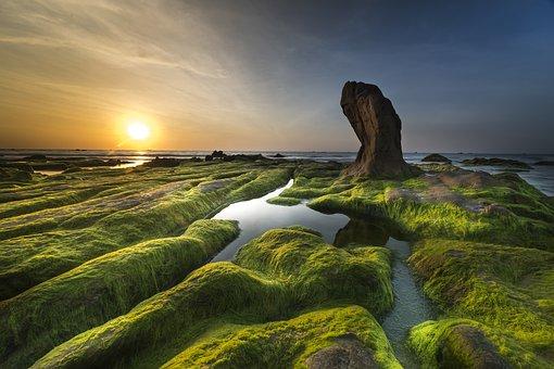 Coast, Moss, Province, Cothach, The Sea, The Beach